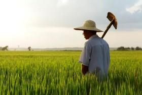 El futuro de China está en el campo: el gobierno central recortará recursos en la industria pesada para reasignarlos al desarrollo del sector agropecuario