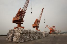 Otro factor bajista para el maíz: China rechaza el ingreso de un embarque con un evento no aprobado de Syngenta