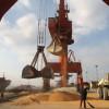 China rechazó casi 890.000 toneladas de maíz estadounidense por tener un evento no aprobado de Syngenta: alerta por la introducción de un nuevo material
