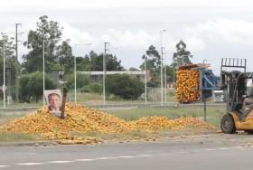 Siguen los éxitos: este año las exportaciones chilenas de naranjas y mandarinas superarán a las argentinas