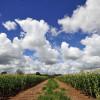 Nueva frontera: emprendedor argentino se instaló en Colombia para desarrollar tierras agrícolas en los llanos orientales