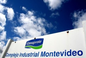 Rompiendo paradigmas: aumentó la participación de los tamberos uruguayos en la cadena de valor del negocio lácteo
