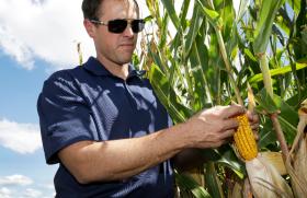El maíz salió de terapia intensiva: pero con el ingreso al mercado de un cosechón estadounidense no pueden esperarse milagros