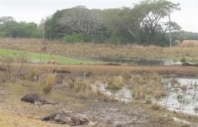 Siguen sin presentarse lluvias importante en la zona pampeana: pero se avecina un nuevo desastre en el NEA