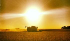 Esta semana habrá tiempo ideal para avanzar con la cosecha gruesa