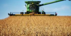 Esta semana siguen las condiciones ideales para avanzar con la cosecha gruesa: no se prevén lluvias ni heladas