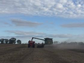 No se esperan lluvias en las principales regiones agrícolas: semana ideal para avanzar con la cosecha gruesa