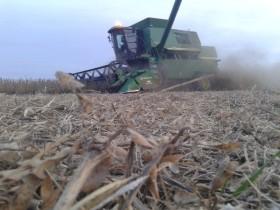 Sigue la cosecha gruesa: no se prevén lluvias en la mayor parte de las regiones productivas