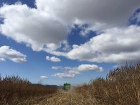 Último tramo de la cosecha gruesa contra reloj: la semana que viene regresan las lluvias al sur de la región pampeana