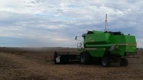 Hasta el viernes seguirá el tiempo óptimo para avanzar con la cosecha gruesa