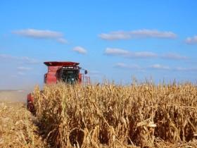 Coberturas: la mayor parte de los productores argentinos está bien preparado para aguantar la destrucción de precios del maíz en el mercado internacional