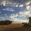Siguen sin aparecer perspectivas de lluvias importantes que detengan la cosecha en la zona pampeana