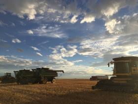 La demanda global se abalanzó sobre la cosecha gruesa estadounidense: hasta Brasil quiere maíz norteamericano