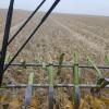 Márgenes proyectados 2017/18: el maíz temprano es por lejos el cultivo menos competitivo