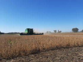 ¿Dónde están los gobernadores de las provincias agropecuarias para recordar que el valor de la soja supera los 20.000 $/tonelada?