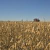 Buena noticia: esta semana sigue el tiempo ideal para avanzar con la cosecha gruesa