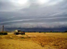 Se perdieron hasta el momento 200.000 toneladas de trigo por el impacto de las bajas temperaturas