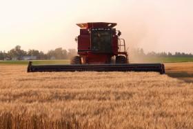 El valor de la escasez: trigo de alta calidad tiene un precio hasta 45% superior que el cereal condición cámara