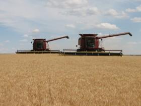 Paciencia: la mejor estrategia para comercializar trigos de buena calidad en el segundo tramo de la campaña 2012/13