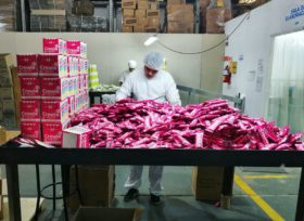 Una embotelladora de Coca Cola y Crowie podrán importar tecnología libre de aranceles por 663.000 dólares