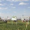 Cambio de tendencia: la mayor parte de los cultivares de soja registrados este año no cuentan con el evento Intacta