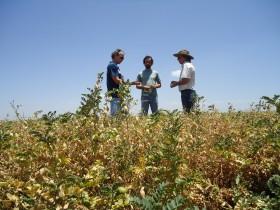 Posible Puerta 12 para el garbanzo: en 2012/13 se duplicará el área sembrada en la Argentina