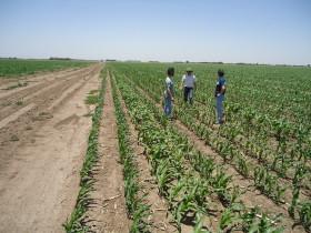 Cambio estructural en el mercado de arrendamientos agrícolas: el poder de negociación dejó de estar en manos de los propietarios