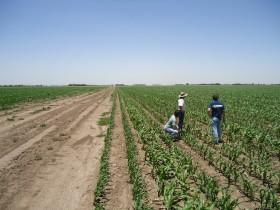 Aparcerías agrícolas: una alternativa para reducir el monto de préstamos forzosos que los productores hacen al gobierno