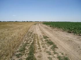 El factor cambiario: nuevo componente clave para evaluar un negocio de arrendamiento agrícola
