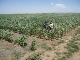 Alquileres agrícolas: los propietarios de campos que financiaron a los arrendatarios lograron protegerse mucho mejor del combo inflación + devaluación