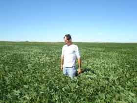 Oportunidad: esta semana muchos empresarios agrícolas vendieron soja nueva para asegurar ingresos en cosecha