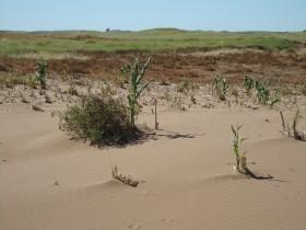 En Uruguay comienza a ser obligatorio el manejo responsable de suelos: esperan que contribuya a normalizar el valor de los arrendamientos agrícolas