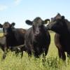 China ya representa casi un 25% del negocio de exportación de carne uruguaya: paga más que Rusia