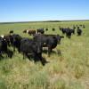 El gobierno no deja levantar vuelo a la industria exportadora de carne bovina para evitar una suba de precios que se da de todas formas