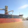 Se completó el primer cupo de exportación de trigo argentino con ingresos por 162 M/u$s: liberan otras 500.000 toneladas
