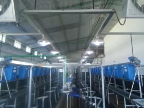 Paradoja: por la fuerte suba del precio internacional de la leche en polvo los tamberos terminarán subsidiando a las industrias lácteas exportadoras