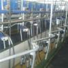 Un empresario argentino comenzó a construir en Uruguay el complejo lácteo integrado más grande de la región