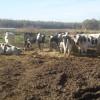 Séptimo mes consecutivo de subsidio agrícola para los tambos: cuenta regresiva para un posible cambio de escenario