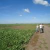 Arrendamientos agrícolas 2014/15: los propietarios que cerraron acuerdos tempranos hicieron el mejor negocio