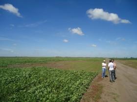 Alquileres agrícolas: los propietarios de campos deberán verificar la situación de los trabajadores del arrendatario