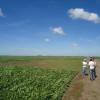 Los propietarios de campos que cerraron alquileres agrícolas tempranos hicieron mucho mejor negocio: esperar fue contraproducente