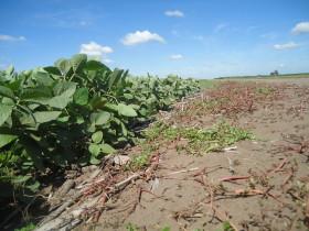 Llegó el mercado climático sudamericano: para aprovechar las oportunidades en soja nueva es necesario realizar una buena gestión financiera