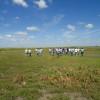 Para que creza el área de cereales se necesitará financiación: por suerte volvieron los créditos en dólares para el agro argentino