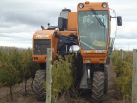 Mendoza: la cosecha mecánica de uvas llegó para quedarse