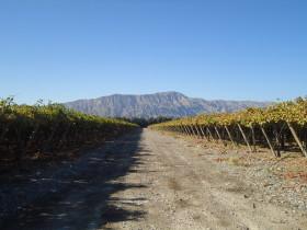 Valor desagregado: las exportaciones argentinas de uvas frescas cayeron más de un 35%