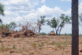 Bergman ordenó al gobierno salteño que suspenda 32 habilitaciones de desmontes por considerarlas irregulares: deberán reponerse casi 45.000 hectáreas de bosques nativos