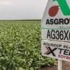Illinois: un año atrás contratistas rurales advirtieron a las autoridades sobre los peligros del uso generalizado del dicamba