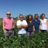 Un logro argentino: el Inase aprobó la variedad de soja Tango 4S que tiene la mayor parte de sus vainas con cuatro semillas