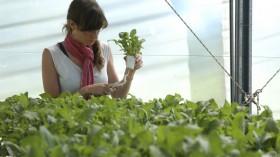 Cristina lo hizo: se derrumbó la cantidad de inscriptos en agronomía por la pauperización del negocio agrícola
