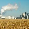 Sigue la resucitación del maíz gracias a las compras de la demanda real a pesar de las apuestas bajistas de los especuladores
